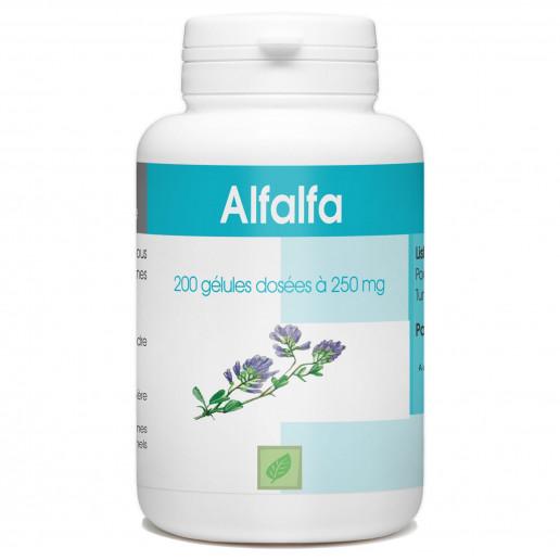 Alfalfa - 200 gélules à 250 mg