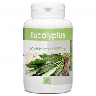Eucalyptus - 200 gélules à 250 mg